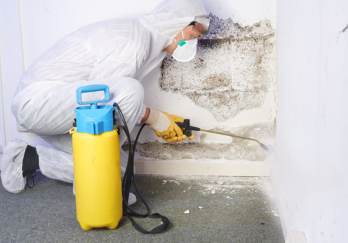 mold-removal-img1